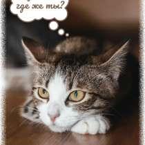 Кому котёнка в самом расцвете сил? Скорее звоните!, в Фрязине