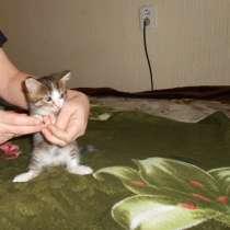 Отдам котят, в Томске