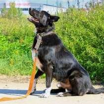 Великолепный Рэмбо, крупный, очень добрый пес в дар, в Москве