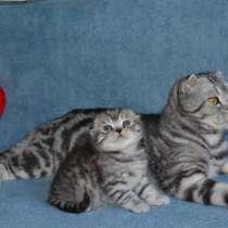 Котята, в г.Черновцы
