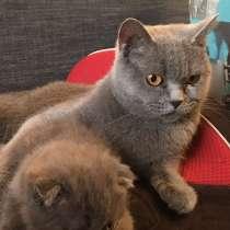 Продажа котят, в г.Орша