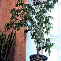 Растения комнатные, в Красноярске
