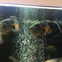 Продам рыбу, в Тамбове