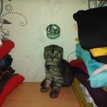 Продам котят, в Снежинске