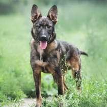 Очаровательный пёс Шурик в добрые руки, в Москве