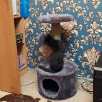 Отдам котенка, в Нижневартовске