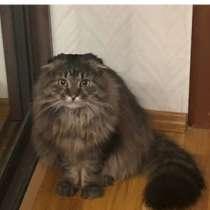 Пропал кот Пух, в Егорьевске