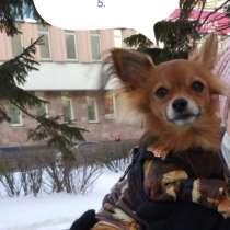 Нужен выгул для тойчика, в Архангельске