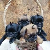 Уникальный микс Мопс+Кинг 1,5мес, в Москве