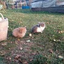 Серая кошечка, рыжий - котик, в Нижнем Новгороде