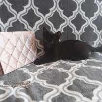 Кошка, в г.Брест