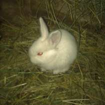 Молодняк кроликов, в г.Макеевка