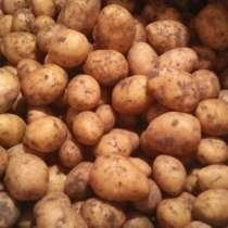 Продукты питания. Картофель, морковь, в г.Павлодар