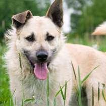 Белоснежный красавец Шумахер, молодой особенный пес в дар, в Москве