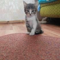 Красивые котята даром, в Улан-Удэ