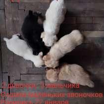Отдаем щенков!, в г.Тирасполь