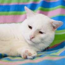 Роскошный кот с мягким и добрым нравом Зевс ищет дом, в Москве