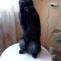 Отдам кота в хорошие руки бесплатно, в Кемерове