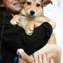 Маленький и трогательный щенок, в Санкт-Петербурге