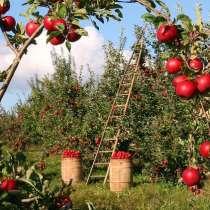 Продается яблочный сад в центральной Турции. Плодоносящий, в Москве