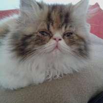 Продам котят, в г.Saint-Hilaire-de-Riez