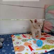 Котята в дар, возраст 3 мес, в г.Могилёв