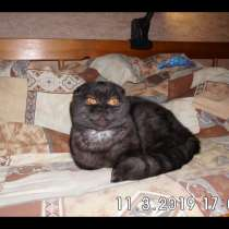 Кот на вязку, в Владимире