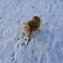 Передержка животных и выгул собак, в Санкт-Петербурге