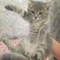 Котёнок, в Уфе
