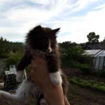 Отдам котят, в Братске