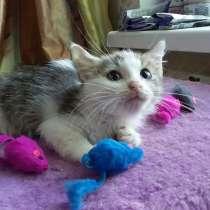 Маленький хрупкий котёнок, в Санкт-Петербурге