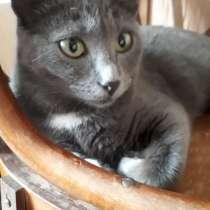 Кошечка ищет дом, в Кемерове