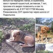 Украли или потерялась наша девочка, в Москве