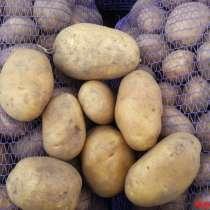 Картофель крупный, в г.Новополоцк
