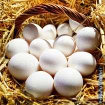 Продаю куриные яйца. Частное хозяйство! г. Бишкек, в г.Бишкек
