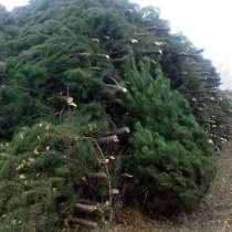 Новогодние живые елки, сосны, искусственные елки оптом, в Новосибирске