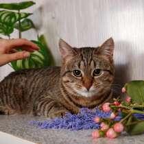 Полосатая кошка Мышка ищет дом, в Москве