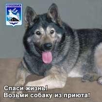 Собачки из приюта ищут любящих хозяев, в Воркуте