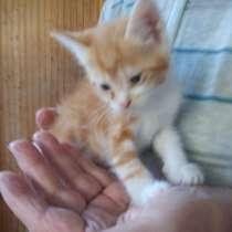 Весёлые котята рыжики ищут добрых хозяев и дом, в Геленджике