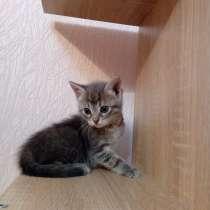 Отдаю котенка девочка синие глаза 2 месяца, в Краснодаре