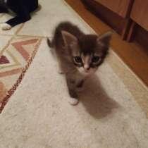 Отдам котёнка в добрые руки, в г.Берёза