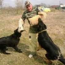 Дрессировка собак, в Тимашевске