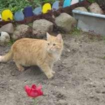 Молодой котик, в г.Брест