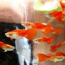 Рыбки и растения, в Гулькевичах
