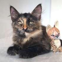 Котенок Лучик, девчушка-очаровашка. В добрые руки, в Москве