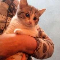 Срочно три котёнка БЕСПЛАТНО !, в Рязани