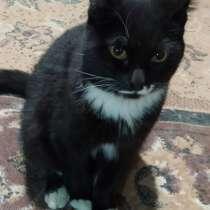 Отдам котенка в добрые руки, в Новосибирске