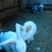 Продам кроликов, в Магнитогорске