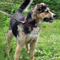 Ваш самый верный друг Молодой домашний пес Рэд, в Москве