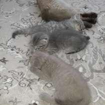 Продам котят, в г.Мозырь